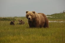 Nat Geo's Bears Of The Last Frontier